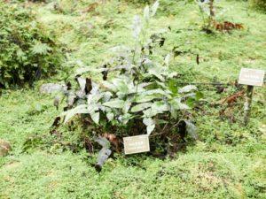 福山植物園中低海拔木本植物