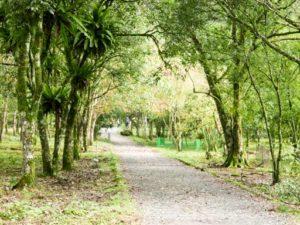 太平山翠峰湖步道