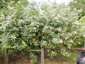 福山植物園木本植物