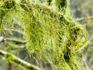 福山植物園植物