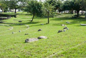 宜蘭親水公園的樹