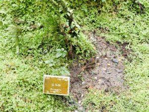 見晴懷古步道旁的植物