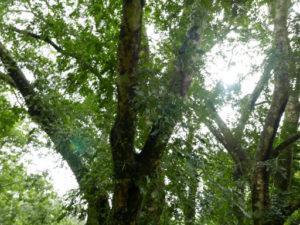 福山植物園木本樹木